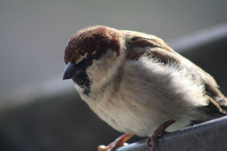 Close-up of sparrow