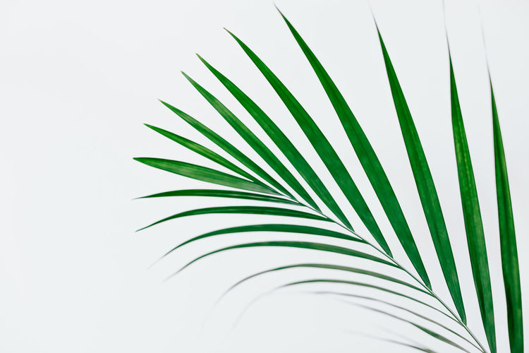 Close-up of palm leaves against clear sky