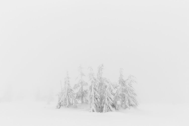 Norwegian winter landscape Alps Beauty In Nature Cold Temperature Landscape Landscape_photography Mist Nature No People Non-urban Scene Norway Norway Nature Remote Scenics Season  Snow Tranquil Scene Tranquility Weather White Color Winter Ice Age