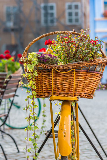Flower basket on a bicycle Arrangement Basket Bicycle Bike Cycling Decoration Flower Flower Basket Flower Basket Bicycle Hanging Old Town Pannier Potted Plant Rustic Sighisoara Town Urban Urban Decorations Vintage Colour Of Life Vintage Setting Eyeemphoto The Essence Of Summer Hidden Gems  - at Sighisoara, Romania