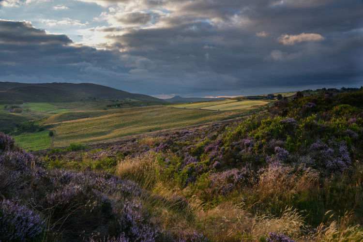 Evening view from Ramshaw Rocks Beauty In Nature Cloud Cloud - Sky Day England Evening Grass Grass Heather Landscape Moorland Nature No People Outdoors Peak District  Purple Ramshaw Scenery Scenics Sky Staffordshire Sunlight Tranquil Scene Tranquility Uk