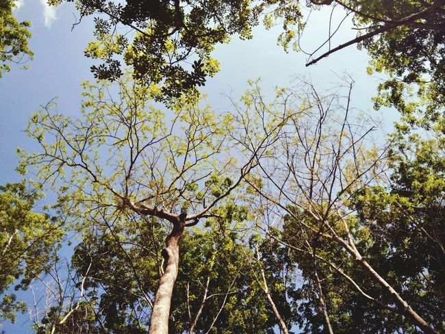 Tree Low Angle View Nature Forest Day Beauty In Nature Branch