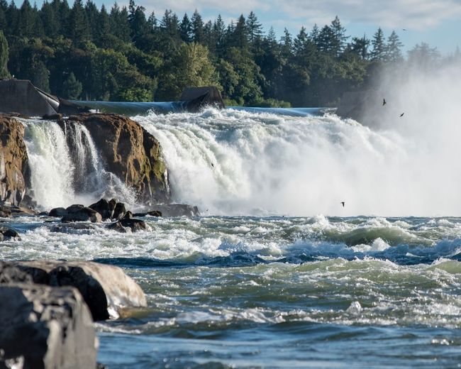 The Falls Waterfalls Outdoor Photography River Outdoors Nature Photography Water Water Motion Beauty In Nature Tree Sport Sea Scenics - Nature Wave Waterfall Power In Nature Power Outdoors Day Flowing Water Nature Splashing