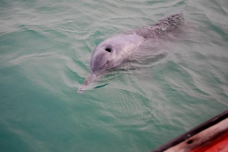 Day Dolphin Fun