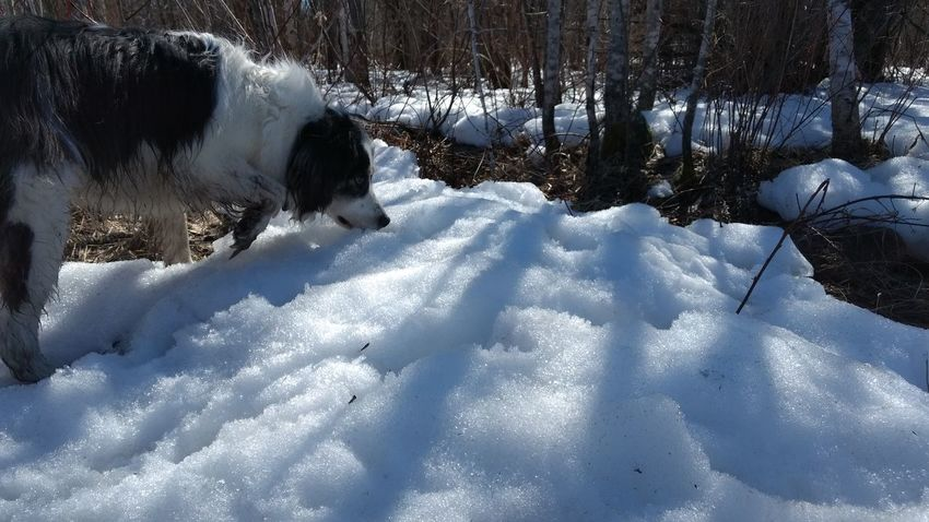 Snow Nature Mammal Animal Themes No People Domestic Animals Day Dog Sunlight