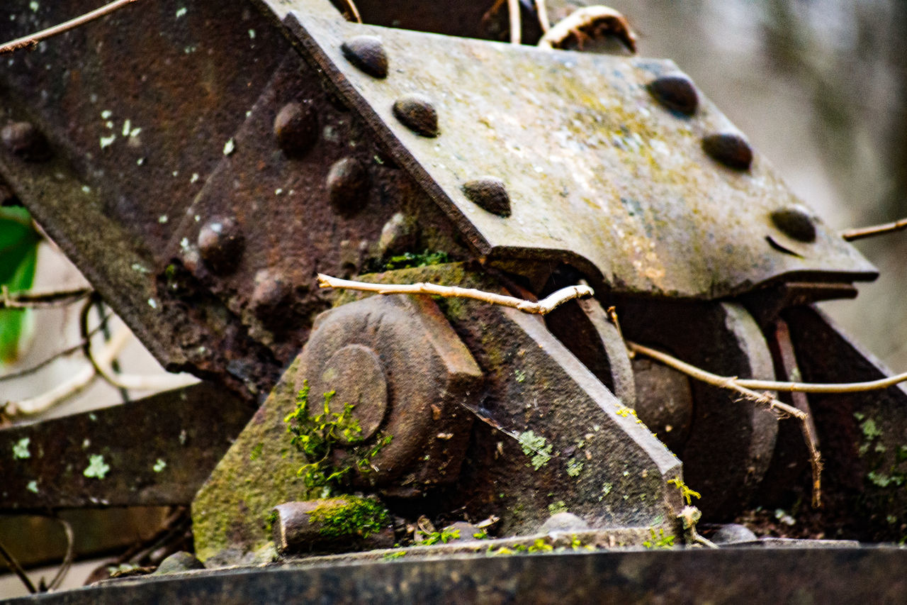 no people, rusty, close-up, day, outdoors, animal themes, nature