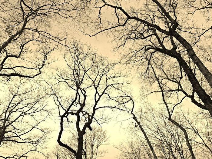 Winter Trees USA Death&chill