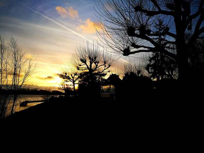 Riverside Tree Sunset Silhouette Water Sky Cloud - Sky Calm Dramatic Sky Horizon Over Water Tranquility Idyllic Moody Sky Tranquil Scene