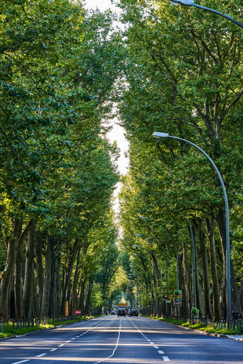 Love these trees Travel Travel Destinations Leading Lines Treptower Park Treptow Berlin Germany Deutschland Tree Road Street Road Sign Green Color