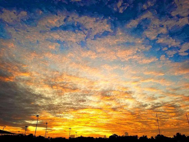 Sunset Tree Silhouette Backgrounds Dramatic Sky Orange Color Sky Cloud - Sky