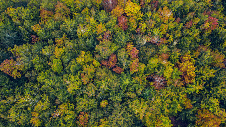 Drone aerial vew of a multi colored forest in a autumn day.