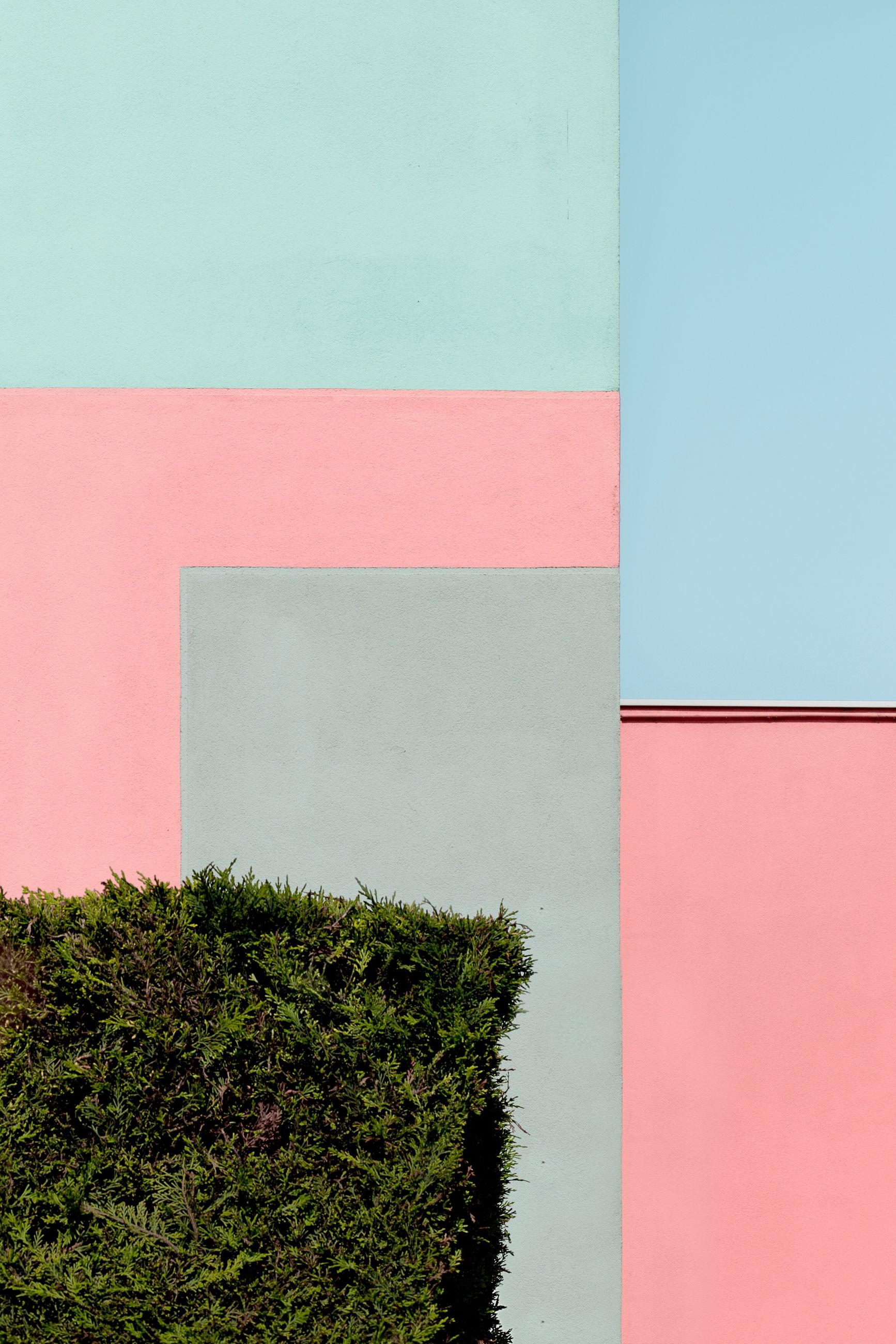 plant, architecture, wall - building feature, built structure, day, no people, blue, red, growth, copy space, green color, building exterior, pink color, nature, outdoors, building, sky, wall, multi colored, tree