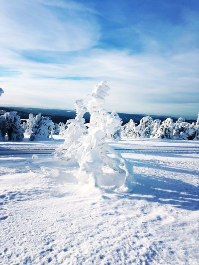 bizarre nature winter sculpture frozen blue sky EyeEm Selects Cold Temperature Winter Snow Sky Frozen Tranquility Ice Landscape Cloud - Sky No People Beauty In Nature Scenics - Nature Outdoors Tranquil Scene