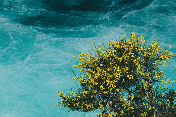 nice color contrast I thought. Beauty In Nature Close-up Contrast Contrasting Colors Day EyeEm Gallery EyeEm Nature Lover Flowers Freshness Nature Nature No People Outdoors River Saltos Del Petrohue Scenics Tranquility Water Wildflowers