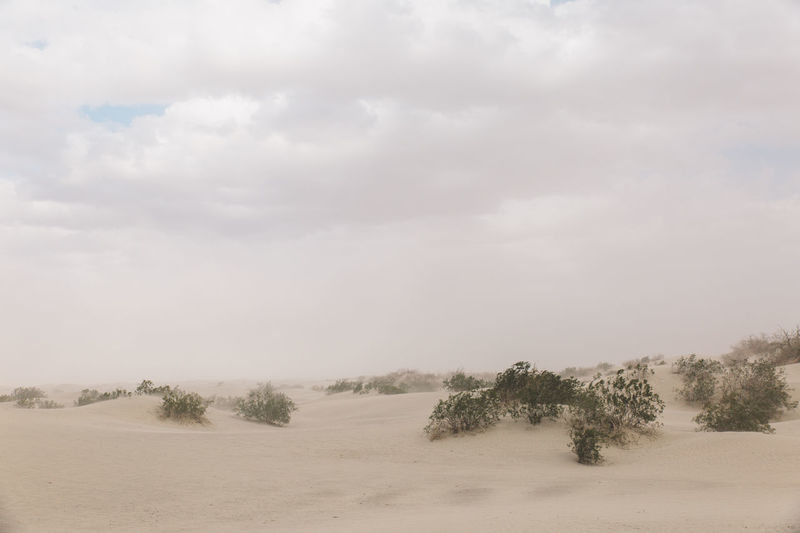 Arid Climate Arid Landscape Beauty In Nature Cloud - Sky Cold Temperature Day Death Valley Death Valley National Park Desert Dunes Fog Landscape Nature No People Outdoors Sand Storm Scenics Sky Snow Storm Tranquil Scene Tranquility Tree Winter