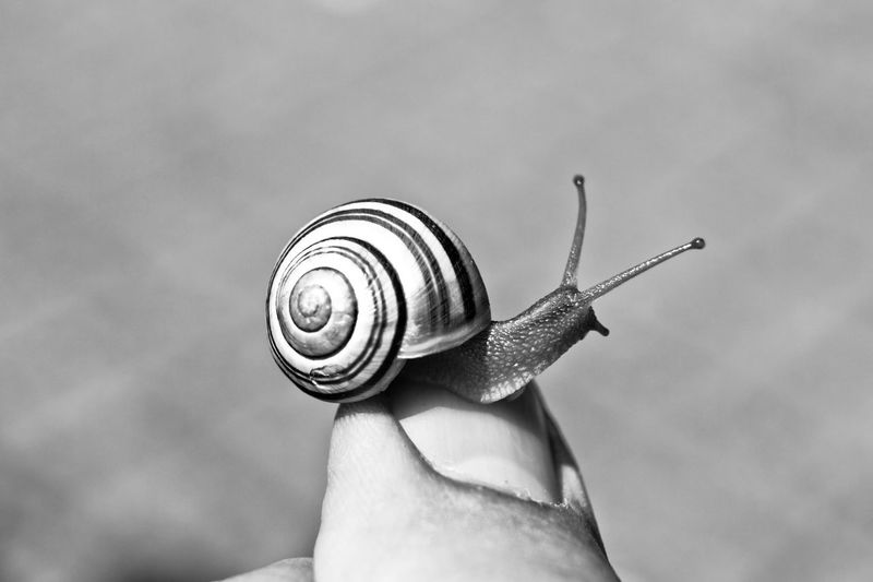 Close-Up Of Snail On Finger During Sunny Day