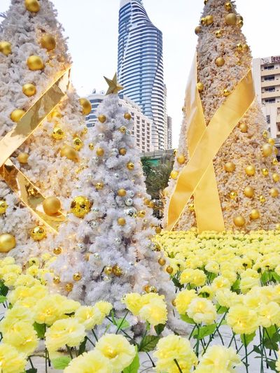Flower Architecture Yellow Building Exterior Built Structure Growth Outdoors Travel Destinations No People Nature Freshness Skyscraper Day Plant Beauty In Nature City Fragility Close-up Sky Chirstmas Tree Chistmas Lights