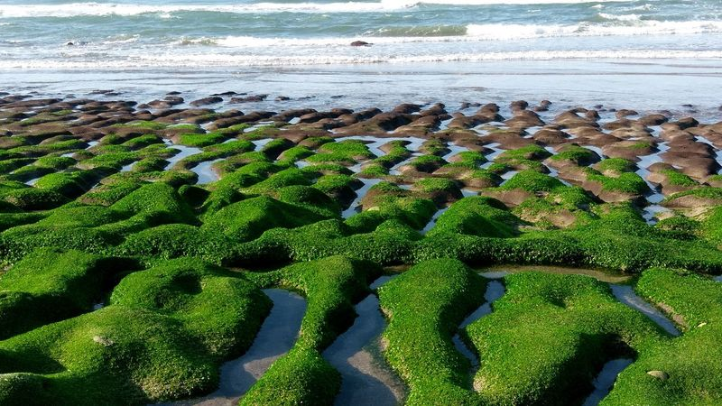 Beach Green Color Sea Nature Day Water No People Beauty In Nature Outdoors Tranquility Sunlight Sand Scenics Growth Wave Freshness Sky 台灣 北海岸 石門 老梅石槽 Taiwan Sunlight Nature Landscape