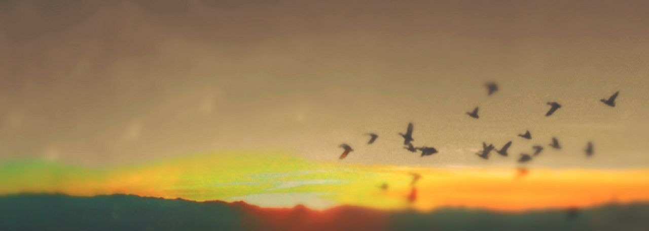 Arizona Sunsets Sky_collection Wild Geese Birds_collection Geese Migration
