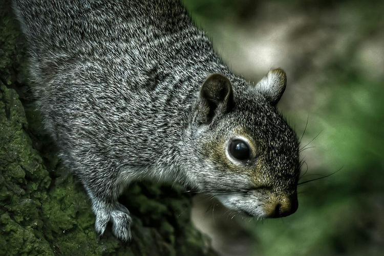 squirrel Animal Themes One Animal Animals In The Wild Animal Wildlife Nature Outdoors Mammal No People Close-up Day Squirrel Springtime Wildlife Photography