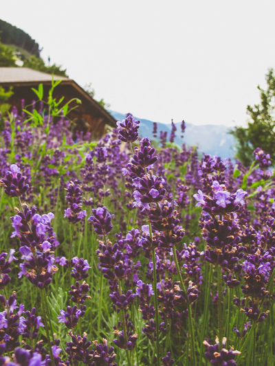 Alpen Alpenflora Alpenwelt Alps Austria Flower Flowerporn Flowers_collection Tirol  Österreich