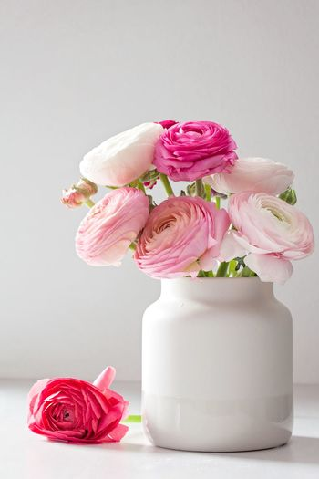 Copy Space Birthday Anniversary Pink Romantic Bouquet Still Life Summer Springtime Spring Ranunculus Pink Color Flowering Plant Flower Freshness Plant Still Life Beauty In Nature Fragility Nature