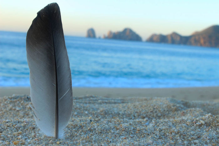 Pluma / feather Animal Themes Beach Beauty In Nature Cabo San Lucas Close-up Day Feather  Horizon Over Water Los Cabos Mexico Morning Light Morning Sky Nature No People Outdoors Sand Scenics Sea Sky Visit Mexico Water