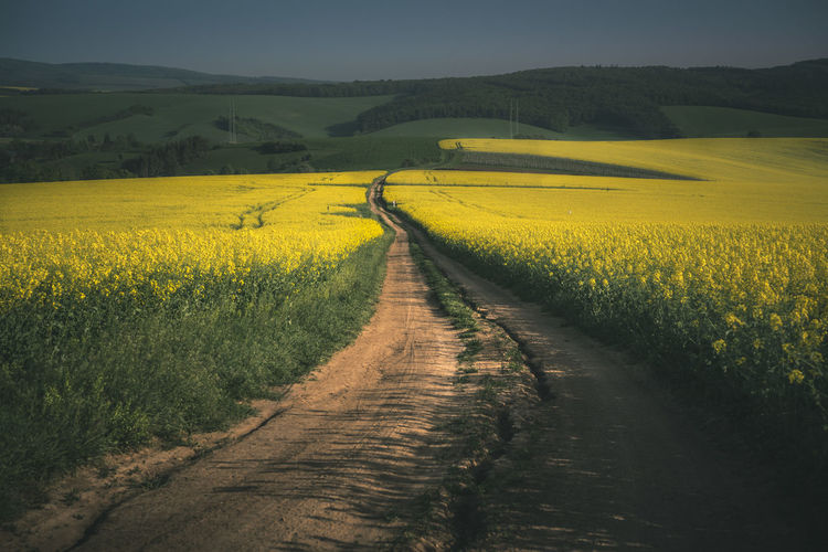 Dirt road amidst oilseed rape field against sky