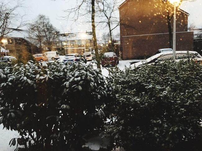 First snow in Holland Winter Cold Temperature Weather Snow Nature Outdoors City Beauty In Nature