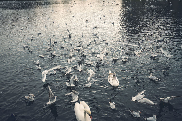High angle view of seagulls flying over sea