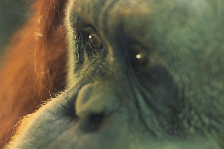 Close-up of primate looking away