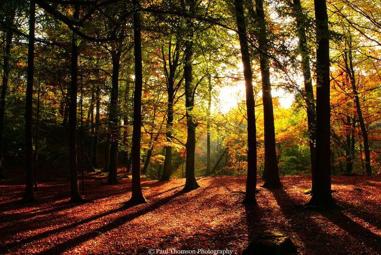 Autumn Shadows Nature Uk Walking Brampton Gelt Woods Landscapes Outdoor Woods Landscapes Rivers Cumbria Uk Trees Autumn🍁🍁🍁