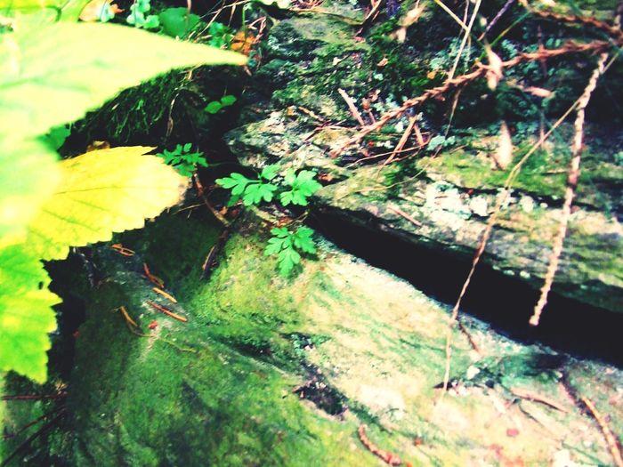 Green Rock Nature Grass