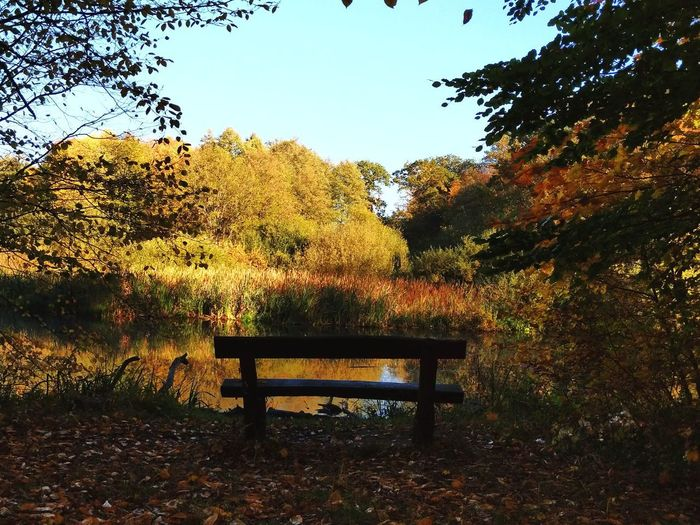 Autumn Autumn colors Autumn Leaves Autumn🍁🍁🍁 Authentic Moments Autumn Collection Togetherness Citylife Urban Lifestyle Park Life Take A Break Break Banch Seat Silence Silent Moment Nature Tree Water Sky