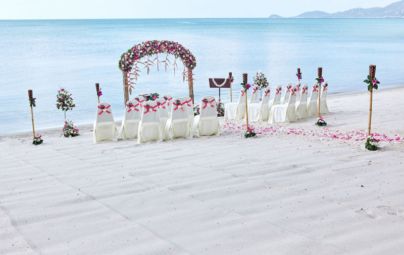 Romantic beach wedding venue settings at seaside decorate with a lot of roses petal on the aisle, blue sea background Beach Wedding Decor Nature Ocean View Panoramic Wedding Venue Background Beach Celebration Chairs Decoration Decorations Event Flower Flowering Plant Ideas Island Nature Outdoors Sea Sea View Seascape Water Wedding White Sand
