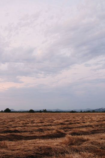 Agriculture Beauty In Nature Cloud - Sky Day Field Landscape Nature No People Outdoors Rural Scene Scenics Sky Tranquil Scene Tranquility