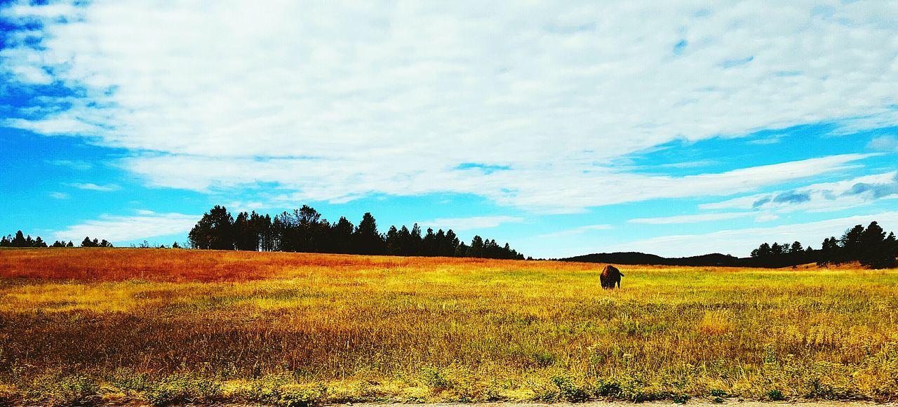 Buffalo Wildlife & Nature Wildlife Photography Nature Photography Natural Beauty Wall Art South Dakota Badlands Feel The Journey
