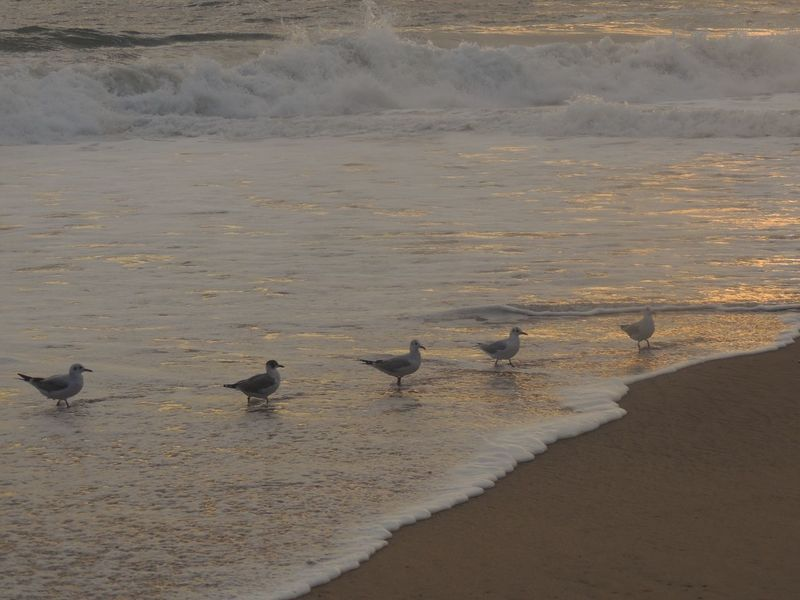 Thank You My Friends 😊 Golden Afternoon Birds On The Beach Birds Of EyeEm  EyeEm Nature Lover Waves In The Sand Waves, Ocean, Nature Sand & Sea Beautiful Scenery Sun Reflection On Sand The Purist (no Edit, No Filter) Reñaca Beach , Chile