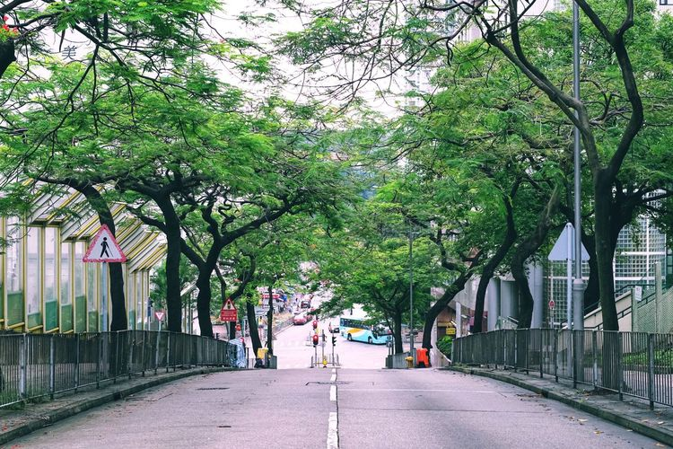 Tree The Way Forward Growth Outdoors Architecture City Day Nature No People Sony Tim Wong Hong Kong