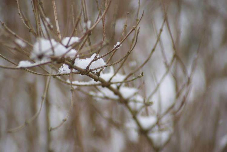 EyeEm Nature Lover Textured  Nature Winter Selective Focus Close-up Cold Temperature Fragility Snow Growth Outdoors Beauty In Nature