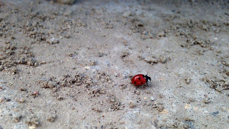 High Angle View Of Ladybug On Field