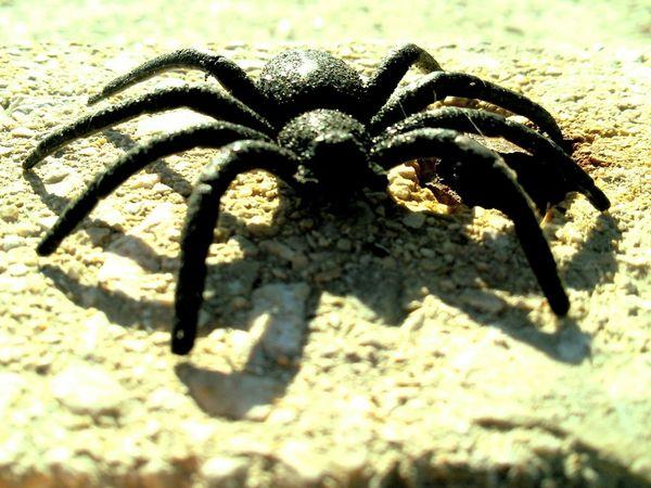 Learn & Shoot: Simplicity Spider Single Object Jumpers  Ewwwwwwwwww