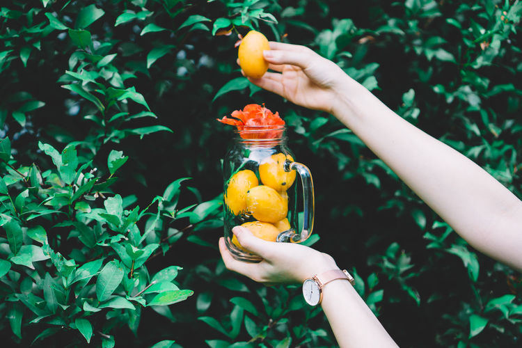 Hand holding Marian plum in glass bottle with red flower Food Freshness Freshness Holding Human Body Part Human Hand Lifestyles Marian Plum Nature One Person Orange Outdoors Plum Real People Summer