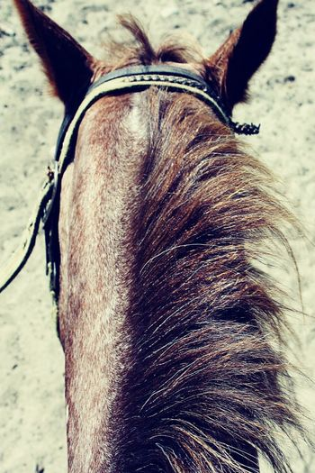 Showcase: February Horse Mane Horse Mane Riding Horses Quiet Equestrian Equestrian Life Horse Riding Serene Outdoors Serenity Elements Magic Moments Aerial View Exploring Happiness Trail Animal Close Up Adventure POV Creative Angle Bridle Horse Tack Bridled Finding New Frontiers