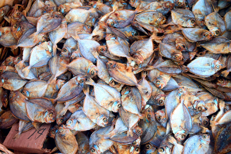 High angle view of dried fish at market
