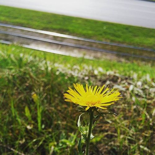 набережныечелны татарстан осень яркости цветок  краскиосени зелень  последниетеплыеденьки Осень2015 September Asuspadfones Inchelny