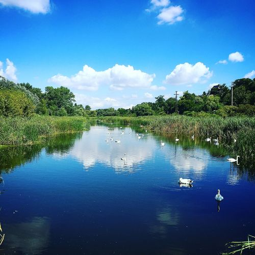 Beauty In Nature Birds Blue Cloud - Sky Lake Nature Outdoors Reflection Sky Swan Tranquil Scene Tree Water
