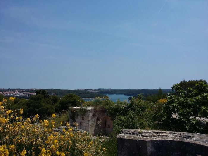 Horizon Over Water Flower Clear Blue Sky And Sea Beauty In Nature Enjoying The Sun Tasting Spirit Tranquility Travel Destinations Beauty Through My Eyes in Croatia