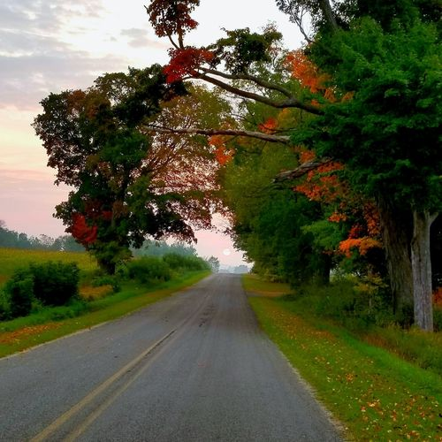 Tree Road Nature Outdoors Landscape Beauty In Nature Scenics Sky Sunrise Sunrise And Clouds Fall Beauty Fall Foliage Fall Season The Week On EyeEm Lost In The Landscape