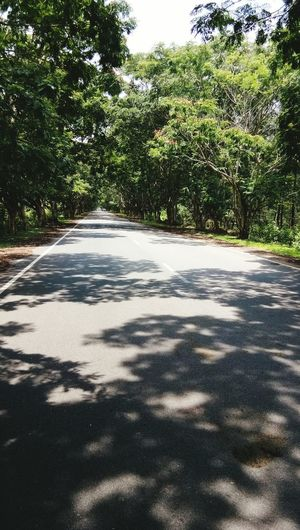 Journey Sunlight Growth Plant Outdoors Shadow Road Nature The Way Forward Beauty In Nature Day Tree Sky No People Tea Crop